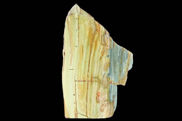 "5.7"" Gary Green Jasper (Larsonite) Bog Wood Stand Up - Oregon"