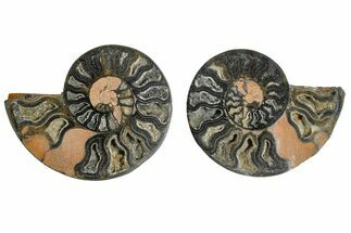 "3.4"" Cut/Polished Ammonite Fossil (Pair) - Unusual Black Color For Sale, #165479"