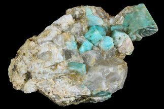 "Buy 3.7"" Amazonite Crystal Cluster with Smoky Quartz - Colorado - #168085"