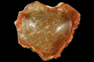 "5.3"" Colorful Polished Petrified Wood Dish - Madagascar For Sale, #169130"