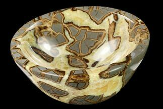 Septarian - Fossils For Sale - #169530