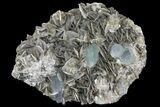 "5.45"" Aquamarine Crystals On Muscovite With Fluorite - Pakistan - #170749-1"