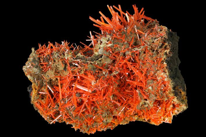 "1.55"" Bright Orange Crocoite Crystal Cluster - Tasmania"