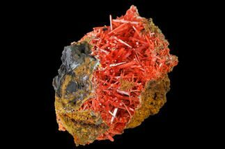 Crocoite - Fossils For Sale - #171630