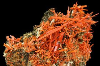 "2.8"" Bright Orange Crocoite Crystal Cluster - Tasmania For Sale, #171692"