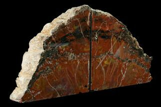 "7.1"" Tall, Arizona Petrified Wood Bookends - Red, Yellow & Purple For Sale, #171998"