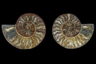 "Buy 6.1"" Agate Replaced Ammonite Fossil (Pair) - Madagascar - #166900"