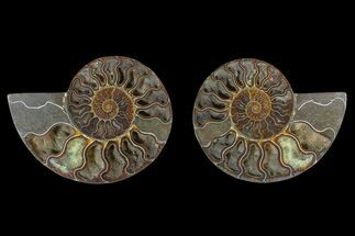 "6.25"" Agate Replaced Ammonite Fossil (Pair) - Madagascar For Sale, #166901"