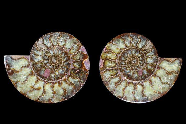 "5.9"" Agate Replaced Ammonite Fossil (Pair) - Madagascar"