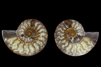 "Buy 5.6"" Agate Replaced Ammonite Fossil (Pair) - Madagascar - #169447"