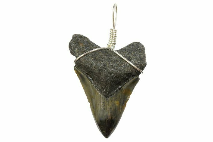 "1.89"" Fossil Megalodon Tooth Necklace"