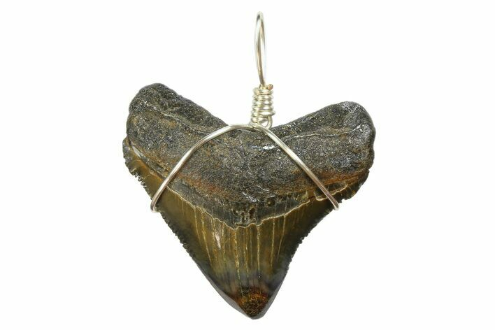 "1.56"" Fossil Megalodon Tooth Necklace"
