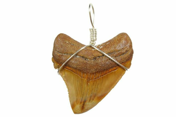 "1.80"" Fossil Megalodon Tooth Necklace"