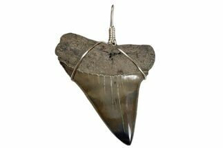 "Buy 2.2"" Wire Wrapped, Fossil Mako Tooth Necklace  - #173875"