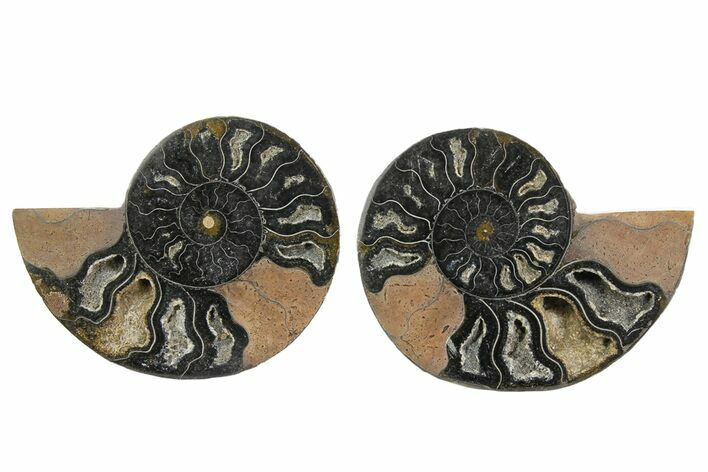 "3.8"" Cut/Polished Ammonite Fossil (Pair) - Unusual Black Color"
