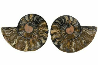 "Buy 3.7"" Cut/Polished Ammonite Fossil (Pair) - Unusual Black Color - #165667"