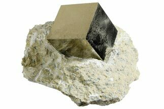 Pyrite - Fossils For Sale - #177102