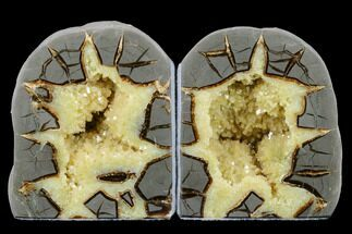 "Buy 4.1"" Tall, Crystal Filled Septarian Geode Bookends - Utah - #176821"