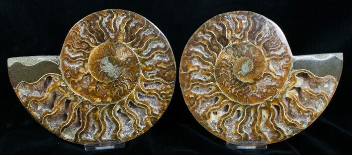 "6.15"" Polished Ammonite Pair With Crystal Pockets"