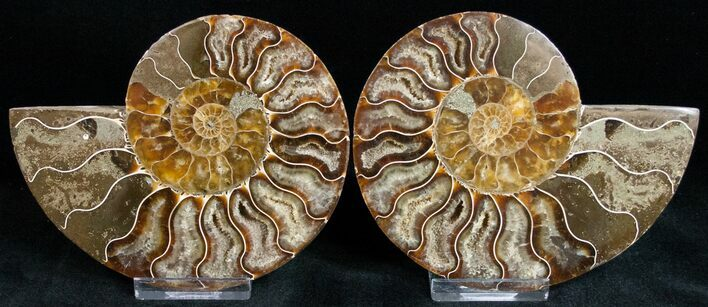 "4.4"" Polished Ammonite Pair With Crystal Pockets"