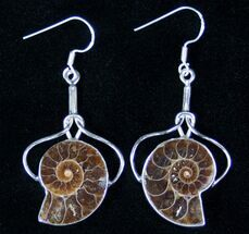 Ammonite Fossil Earrings - Sterling Silver For Sale, #12755
