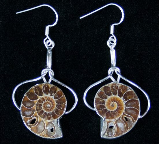 Ammonite Fossil Earrings - Sterling Silver