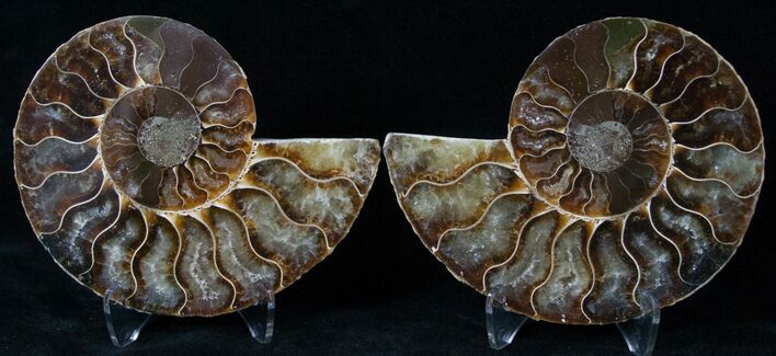 "3.45"" Polished Ammonite Pair - 110 Million Years"
