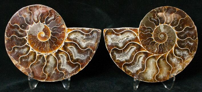 "3.50"" Polished Ammonite Pair - 110 Million Years"