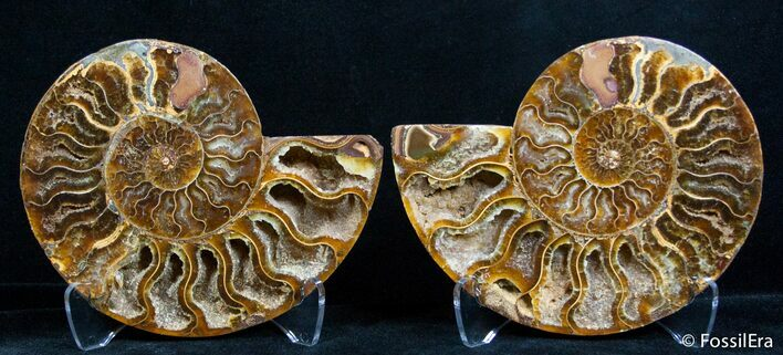 4.45 Inch Split Ammonite Pair