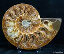 4.65 Inch Split Ammonite Pair - #2630-4