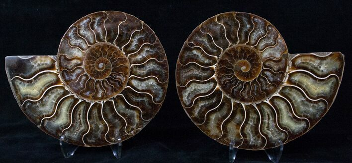 "5.8"" Cut/Polished Ammonite Pair - Agatized"