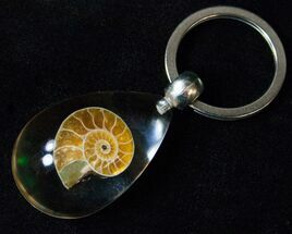 Fossil Ammonite Keychain - Clear For Sale, #16544