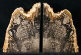 "8.4"" Oregon Petrified Wood Bookends - Oak - #16892-2"