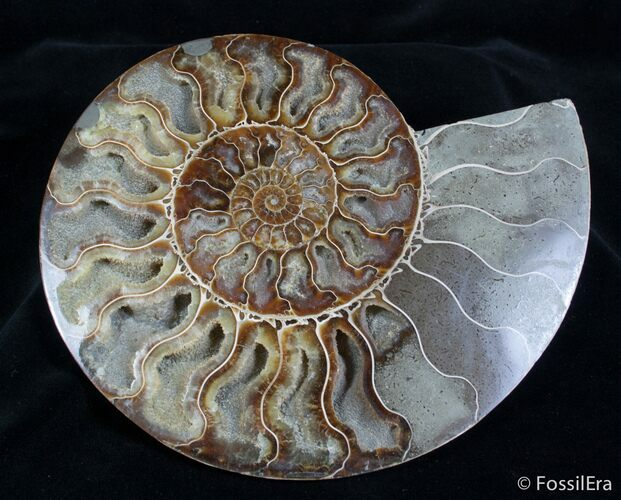 8 1/2 Inch Split Ammonite Pair