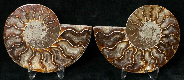 "3.73"" Polished Ammonite Pair - 110 Million Years"