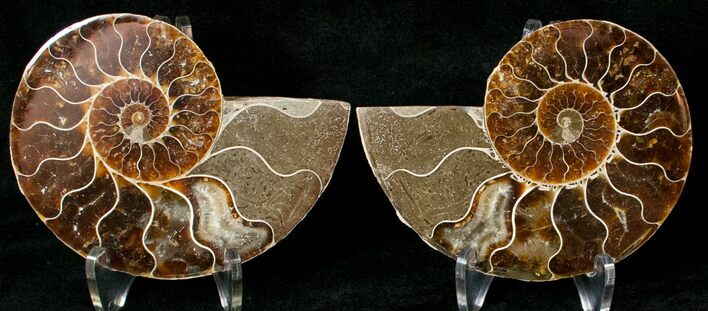 "3.54"" Polished Ammonite Pair - 110 Million Years"