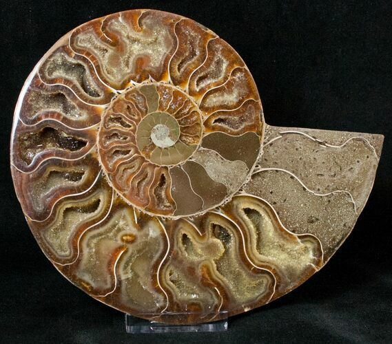5.72 Cut Ammonite Fossil (Half) - Agatized
