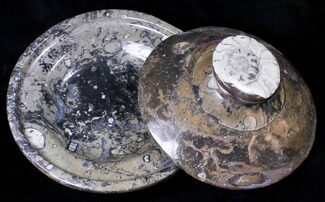 "Buy 5"" Fossil Goniatite Dish with Lid  - Stoneware - #18247"