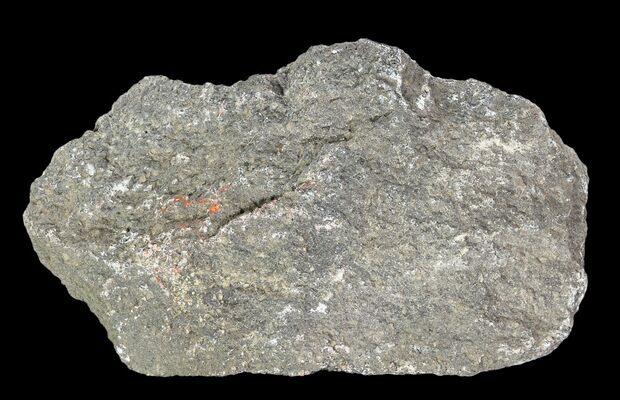 1lb Agatized Dinosaur Bone Jurassic